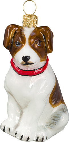 Jack Russell Terrier- Brown and White with Red Collar